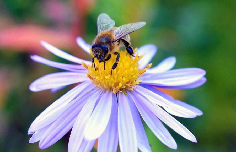 La feina de les abelles